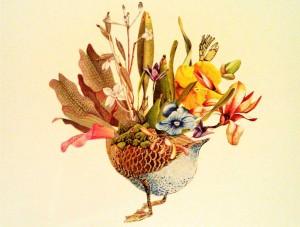 duck-flowers